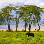 Cráter de Ngorongoro,Tanzania