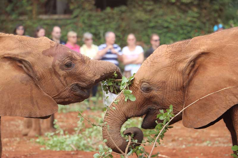 Fotos de elefantes bebes elefante beb bandose con su mam - Fotos de elefantes bebes ...