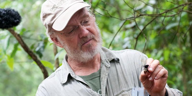 El Dr. David W. Roubik, especialista en abejas y polinización e investigador del Smithsonian Tropical Research Institute (STRI), lleva más de 30 años estudiando las abejas en nuestro país.