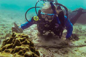 Peggy Fong, ecóloga de comunidades y ecosistemas marinos en UCLA, examina una colonia de Porites lobata en el archipiélago de Las Perlas.