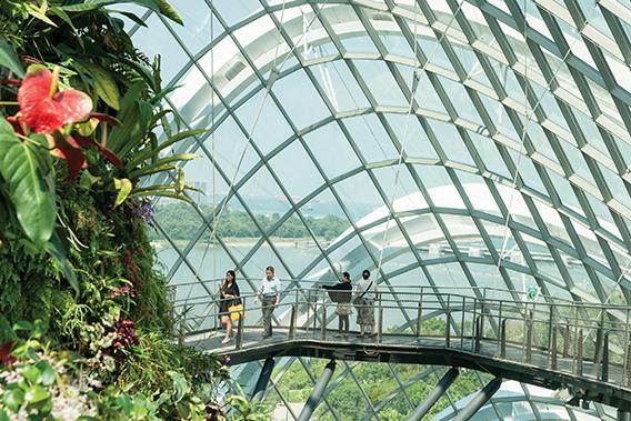 En la exhibición del Bosque Nublado hay caminos diseñados en forma circular alrededor del tronco central de este enorme espacio, donde se pueden apreciar hermosos jardines y magníficos árboles, todo bajo una enorme cúpula de vidrio.
