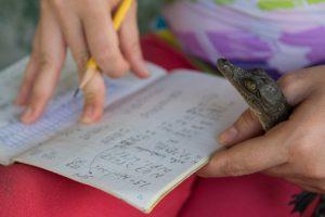 La Dra. Venegas agarra un cocodrilo mientras toma notas.